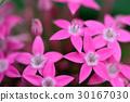 植物 花 花卉 30167030
