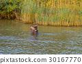 非洲 河馬 公園 30167770