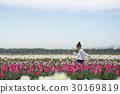 花園 鬱金香 鬱金香花叢 30169819