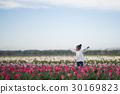 花園 鬱金香 鬱金香花叢 30169823