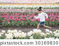 花園 鬱金香 鬱金香花叢 30169830