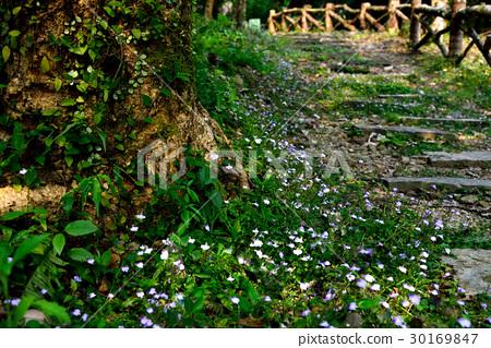 風景 花 階梯 小路 鄉野 樹 鄉間小路 鄉間 30169847
