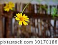 花 花卉 花朵 30170186