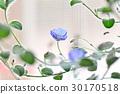 花 花卉 花朵 30170518