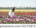花園 鬱金香 鬱金香花叢 30170873