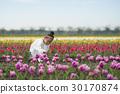 花園 鬱金香 鬱金香花叢 30170874