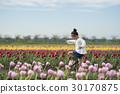 花園 鬱金香 鬱金香花叢 30170875