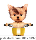 cute, dog, bicycle 30172892