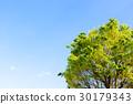 신록의 나무와 푸른 하늘 30179343
