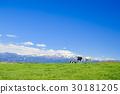 spring, pasture, cow 30181205
