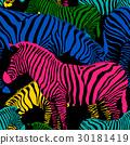 Colorful zebra seamless pattern.  30181419