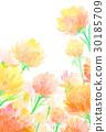 康乃馨 花朵 花 30185709