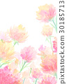 Carnation watercolor illustration 30185713
