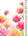 카네이션, 꽃, 플라워 30185716