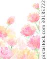 카네이션, 꽃, 잎 30185722