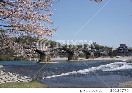 櫻花和金泰橋 30186776