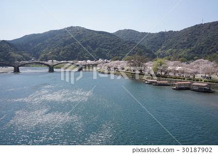 櫻花和Kintaikyo橋的風景 30187902