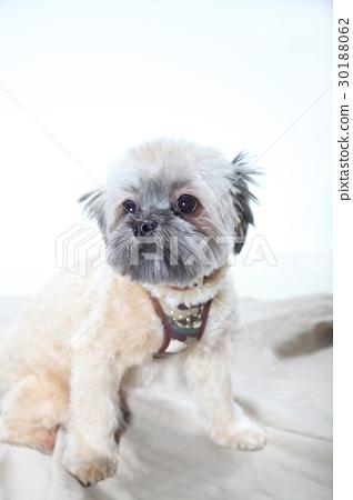 可愛的混合狗 30188062