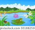 Illustration of a frog at the river 30188259