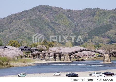 櫻花和Kintaikyo橋的風景 30188556