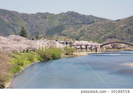櫻花和Kintaikyo橋的風景 30188558