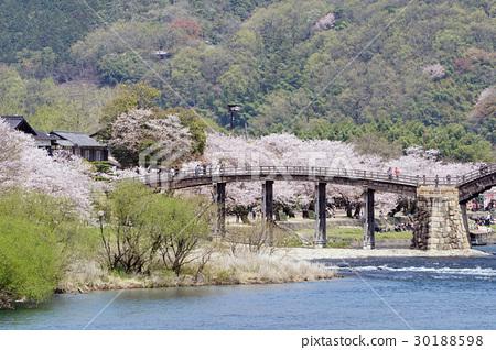 櫻花和Kintaikyo橋的風景 30188598