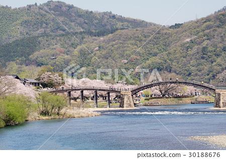 櫻花和Kintaikyo橋的風景 30188676