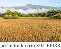 ชนบท,พื้นหญ้า,ทุ่งนา 30190088