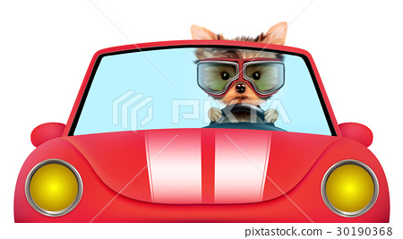 Funny puppy in the cabriolet with aviator goggles 30190368
