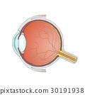eyeball. Stock illustration. 30191938