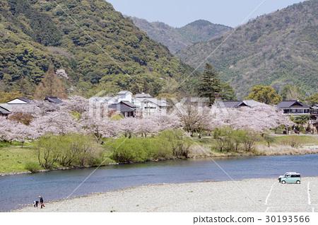 櫻花和岸川 30193566