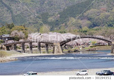 櫻花和Kintai-kyo橋 30194351