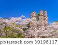 [시즈오카 현] 세계 유산, 니라 산 반사로, 벚꽃의 계절 30196117