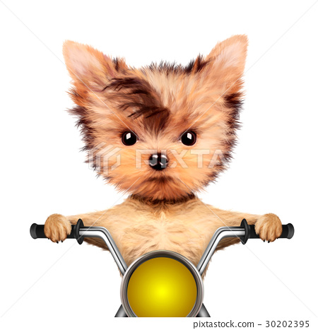 Funny biker dog sitting on a chopper. 30202395