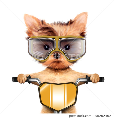 Funny racer dog with bike and aviator googles 30202402