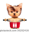 Adorable puppy sitting on a bicycle with basket 30202416