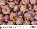 Harvest of garlic. Growing vegetables 30205968