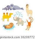 動物 矢量 海象 30209772