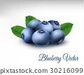 Blueberry with leaves. vector 30216099
