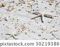 夏天 夏 沙滩 30219386