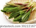 마늘, 야채, 채소 30222167