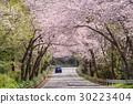 벚꽃 터널을 달리는 자동차 30223404