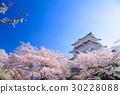 樱花 樱桃树 小田原城 30228088