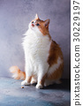 Cat on gray background 30229197