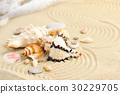 Sea shells on sandy beach 30229705