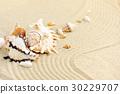 Sea shells on sandy beach 30229707
