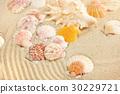 Sea shells on sandy beach 30229721