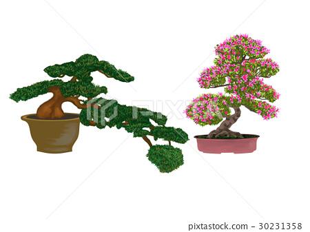 Bonsai pine trees 30231358