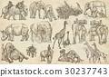 动物 艺术的 涂鸦 30237743