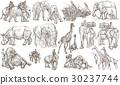 animal artistic elephant 30237744
